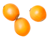 1420491383 hippophae rhamnoides oil image 170x140