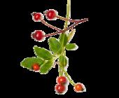 1431111617 rose hip seeds image 170x140